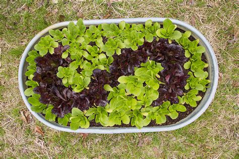 Lettuce Planter by In The Garden Upcycled Lettuce Planter Bonnie Plants