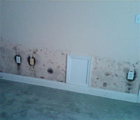 mold in bedroom mold removal and remediation including black mold servpro of south charlotte