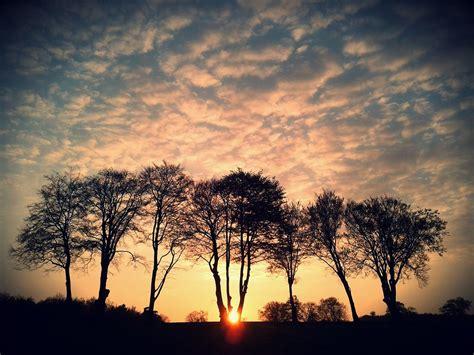 group  trees  sunset    walking  dog