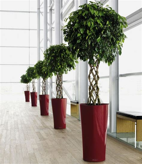 plants for office 17 best images about office plants on pinterest office