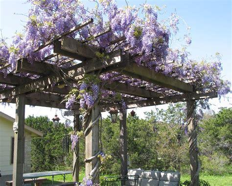 wisteria trellis alamodeus knock some scents into me