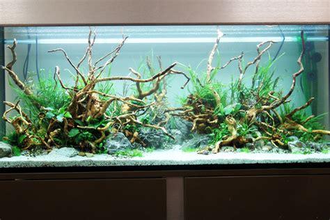 comment realiser  aquarium aquascaping