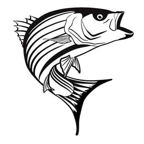 coloring pages rockfish bass fish drawings clipart best