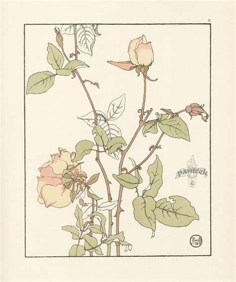 small decorative drawings the rose safrano jeannie foord quot decorative flower