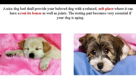 cheap dog beds for sale online get cheap dog beds for small dogs sale