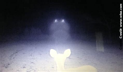ufos descend on deer in mississippi woods | photos