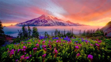 zachi spring mountain landscape sunrise spring landscape of snow mountain meadow flowers