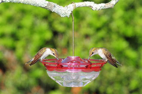 No Leak Hummingbird Feeder birds unlimited how to get hummingbirds to a new feeder