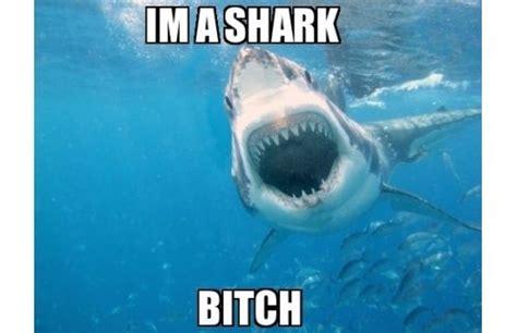 Funny Shark Memes - the 25 funniest shark memes funny sharks shark and memes
