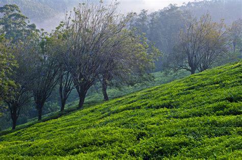 imagenes de jardines rurales banco de im 193 genes 20 paisajes naturales casas rurales