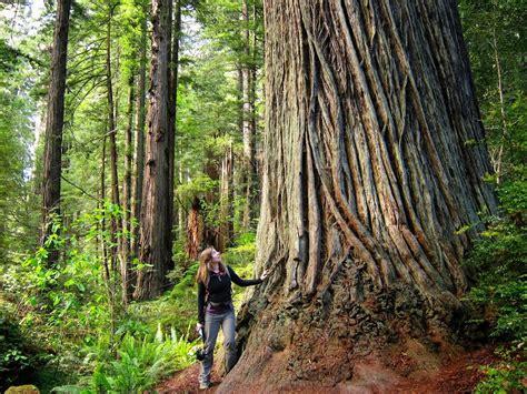 wedding venues in redwoods 2 weddings on the redwood coast humboldt county california