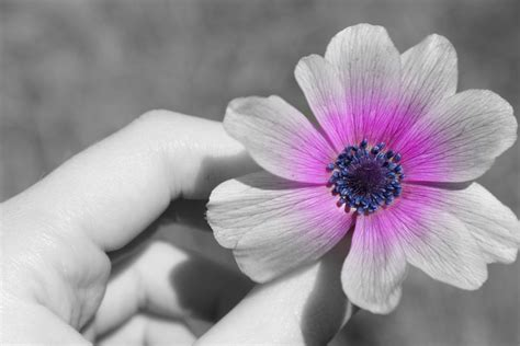 how to make white color how to make black and white photos with color photoshop