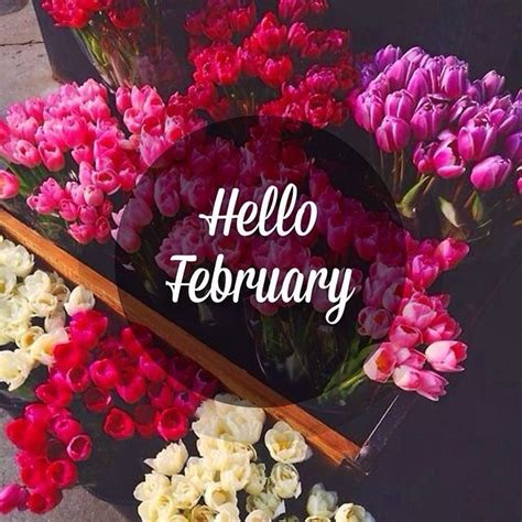 Hello February Flowers Pictures, Photos, and Images for