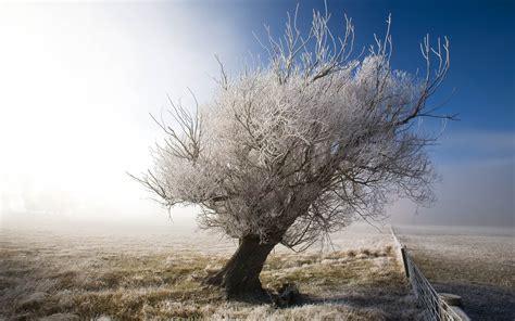 Frozen tree hd desktop wallpaper wallpapercow com