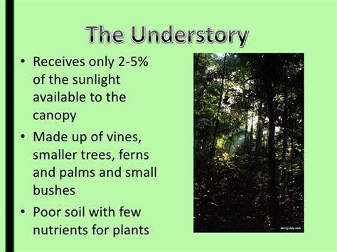 10 Facts About The Forest Floor by Facts About The Rainforest Floor Layer Floor Matttroy