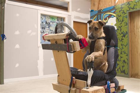 learn how to dogs rescue dogs learn how to drive a car enpundit