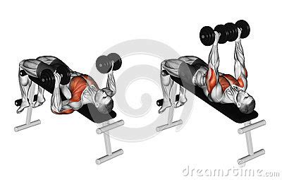 muscles worked by bench press chest workouts incline bench press flat bench press
