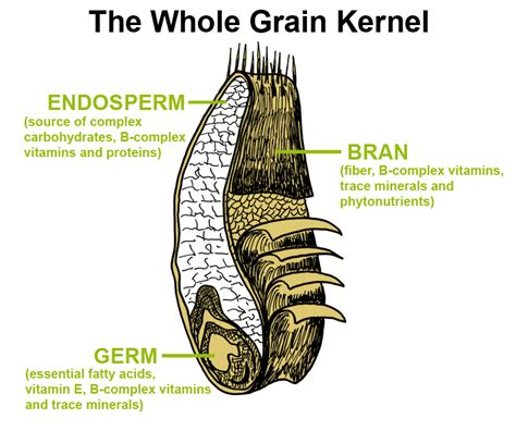 whole grains explained the different types of oats explained chelsea s healthy