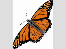 Butterfly Monarch Male · Free vector graphic on Pixabay Free Clipart Downloads Butterflies