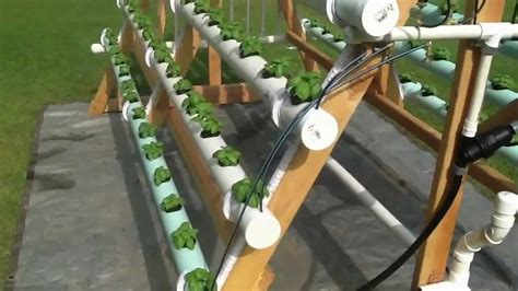 Aquaponic Starter Kit Malaysia aquaponic how to