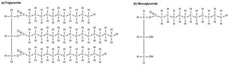 lipid metabolism anatomy  physiology ii
