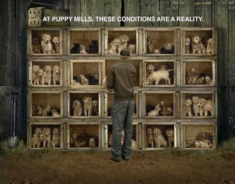 pet stores in ma that sell puppies boston bans pet shops from using puppy mills