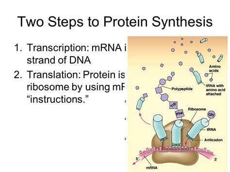 8 protein synthesis steps transcription translation steps my site daot tk