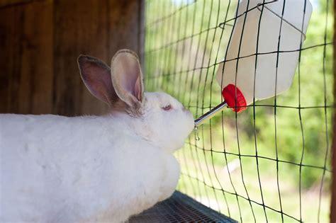 bulletin 1044 backyard production of meat rabbits in