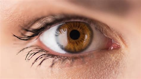 eyeing an eyeball risks high seasonal affective disorder why brown eyed are at risk