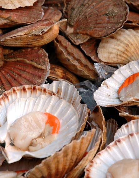 cucinare frutti di mare cucinare i frutti di mare