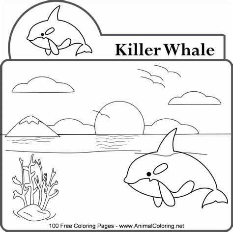 killer whale coloring pages killer whale coloring pages