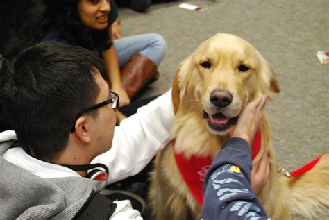 for therapy dogs paws to relax this finals week with therapy dogs news