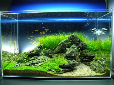 tank aquascape 60cm iwagumi scape 3rd place 2011 aga page 8 the