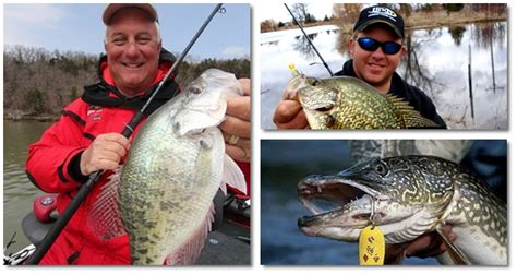 crappie fishing tips instant crappie catching tricks