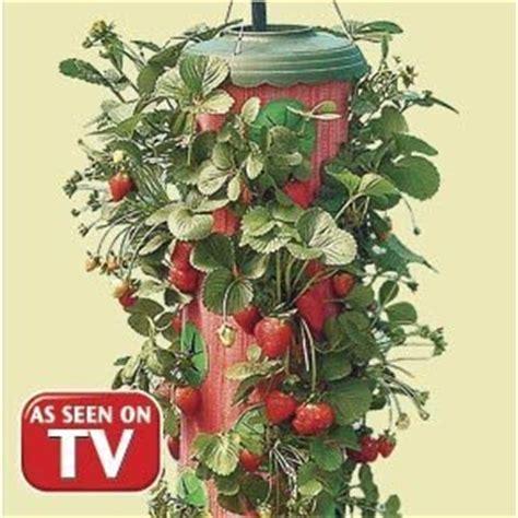 topsy turvy strawberry planter 1 topsy turvy strawberry fruit planter