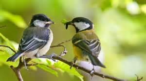 vogel garten v 246 gel im garten brauchen nicht viel gartentechnik de