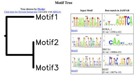 Meme Motif Search - meme motif search 28 images meme overview dr motifs