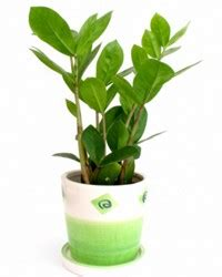 plants that don t need a lot of sun dress up your home with these indoor plants that don t
