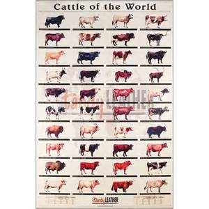 Upholstery Rivets Cattle Of The World Poster Tandy Leather