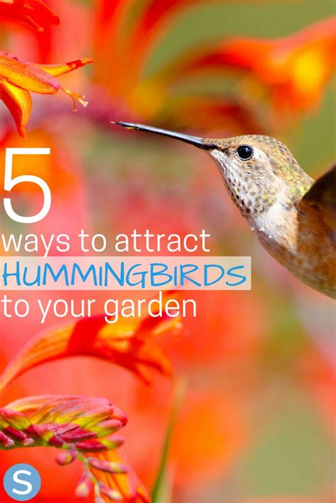 5 ways to attract more hummingbirds to your garden