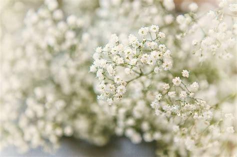 baby flower 50 fabulous baby s breath bouquet flowers golfian