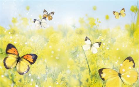 butterfly wallpaper for desktop with animation wallpaper world animated butterfly wallpaper