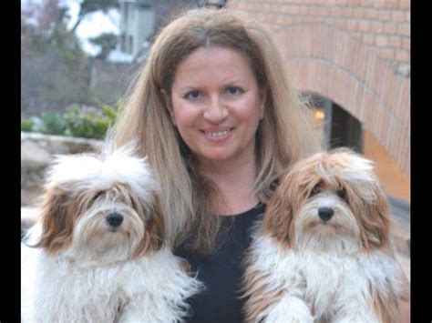 nevena havanese nevena havanese havanese puppies for sale