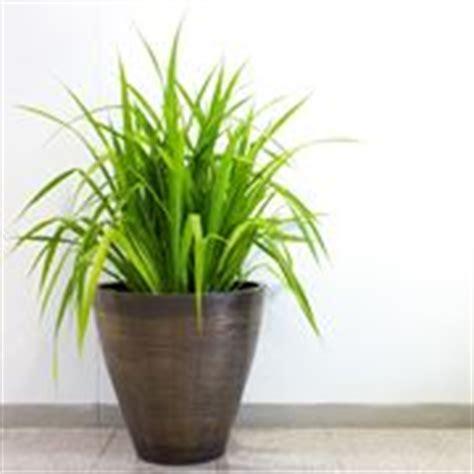 come curare le piante d appartamento elenco aggiornato sulle migliori piante da interno