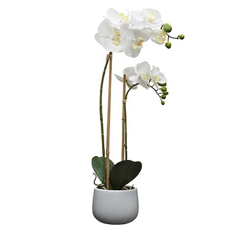 buy house by lewis artificial orchid white large