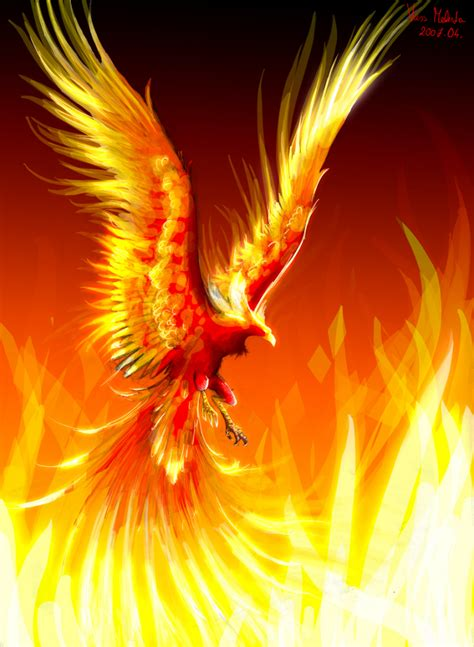 real phoenix bird phoenix rising mythical creature