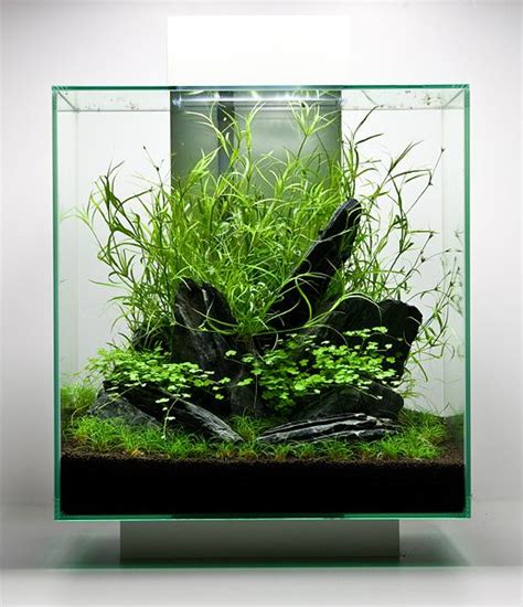 setting aquascape oliver knott set up a fluval edge 2 46 liter powered by