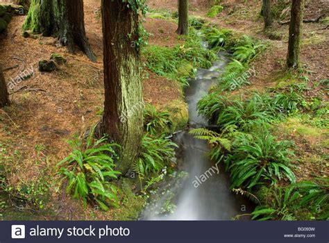 monte aloia nature park location landscape in monte aloia nature park pontevedra galicia