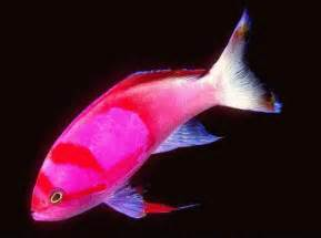 fish colors animal photos hub colourful fish animal biography
