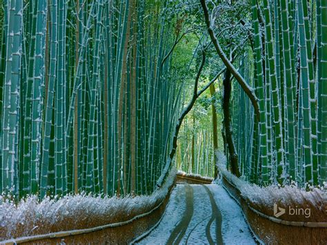 japan bamboo forest arashiyama  bing desktop wallpaper
